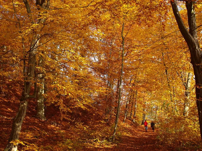 Goldener Herbst im Schlaubetal