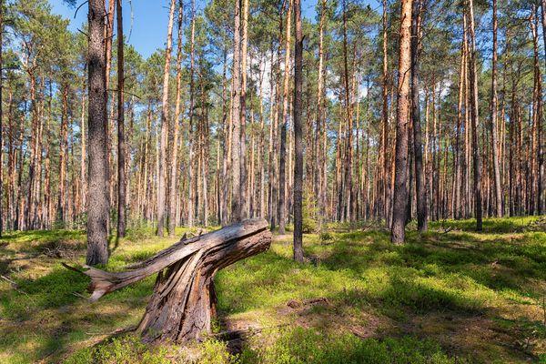 Wald im Schlaubetal, Foto Florian Läufer