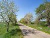 Älteste Apfelbaumallee Brandenburgs in Tempelberg, Foto TMB Fotoarchiv/Steffen Lehmann