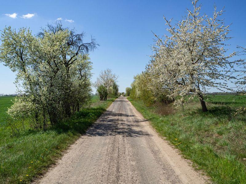 Auf dem Oderbruchbahn-Radweg den Früchten hinterher - Spätaufsteher-Tour