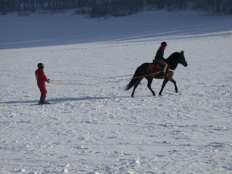 Skijöring Schwaebische Alb