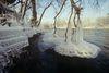 Donauufer im Winter