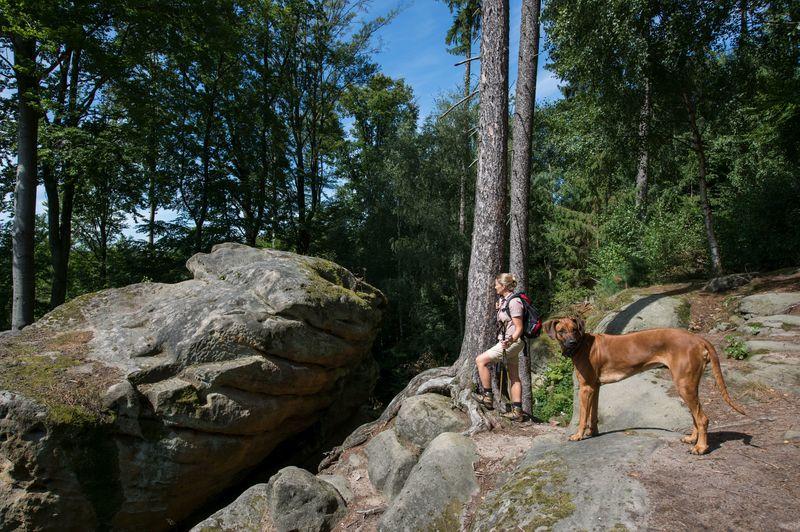 Auf zum Riesenstein - Naturparkwanderweg 3