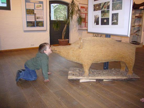 Tierisch gehts im Waldinformationszentrum zu.