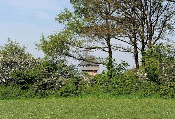 Motte in Neuenrade-Küntrop