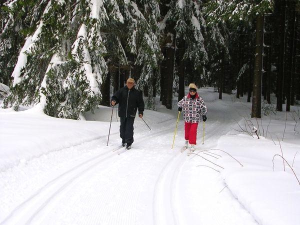Langläufer bei Oberkaltenhof in der Loipe zum Schwarzen See im Böhmerwald