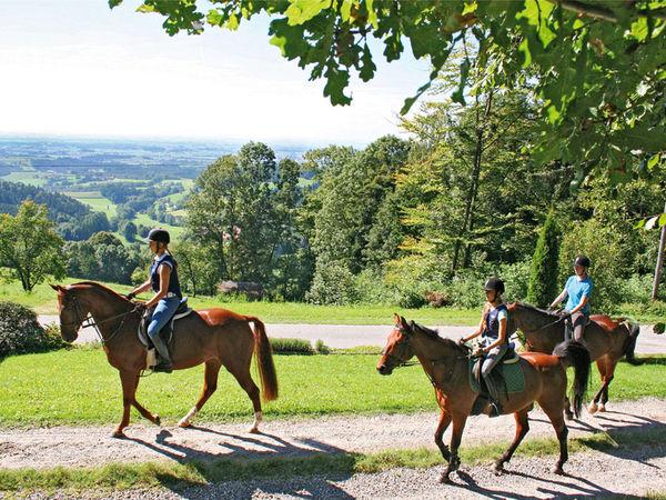 Ausritt beim Reiterhof Schober in Neukirchen im Bayerischen Wald