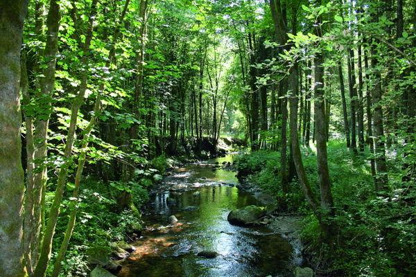 Wandern auf dem Natur- und Erlebnispfad durch das idyllische Perlbachtal