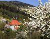 Blick auf die Wallfahrtskirche Pürgl bei Neukirchen im Frühling