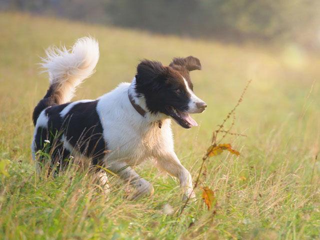 Urlaub mit Hund im Gut Feuerschwendt