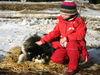 Streicheleinheiten für einen Schlittenhund beim Husky und Pferdehof Dreisessel bei Neureichenau