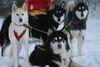 Schlittenhunde im Husky und Pferdehof Dreisessel bei Neureichenau beim Start zu einer Tour
