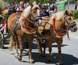 Der Leonhardi-Ritt mit Pferdeumzug und Kirta in Neureichenau