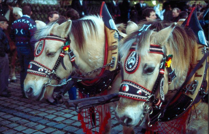 Geschmückte Pferde beim Leonhardi-Ritt in Neureichenau im Dreiländereck Bayerischer Wald