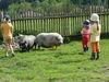 Kindererlebnis im Streichelzoo beim Linknhof in Riedelsbach bei Neureichenau