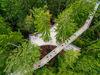 Blick aus der Luft auf die Waldinsel am Baumwipfelpfad Bayerischer Wald