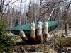 Die Glasarche im Waldmeer Europas am Lusen im Nationalpark Bayerischer Wald
