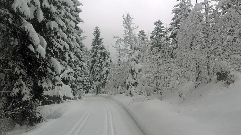 Langlaufen bei Neuschönau