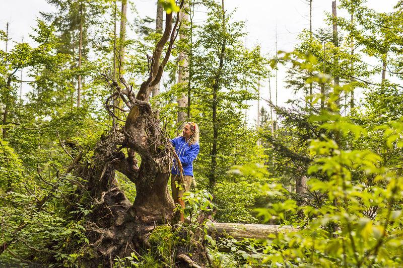 Im Nationalpark Bayerischer Wald