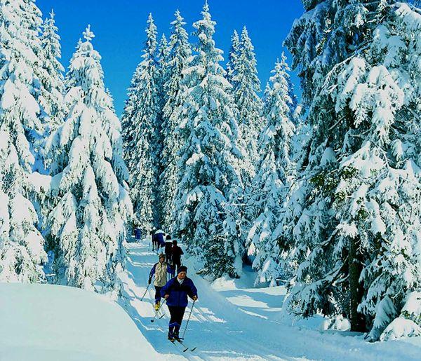 Wintertraum im Langlaufgebiet Nationalparkregion Rachel-Lusen im Bayerischen Wald