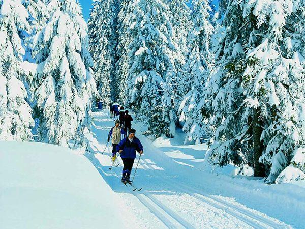 Wintererlebnis beim Skiwandern im Nationalpark Bayerischer Wald