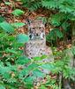 ierfreigelände im Nationalpark Bayerischer Wald