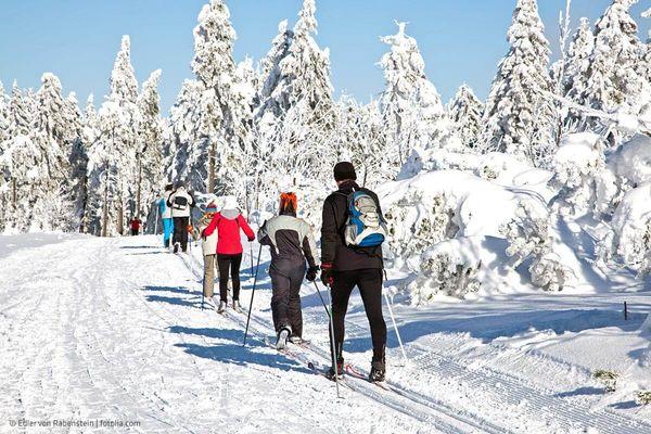 Loipe im Winterwald