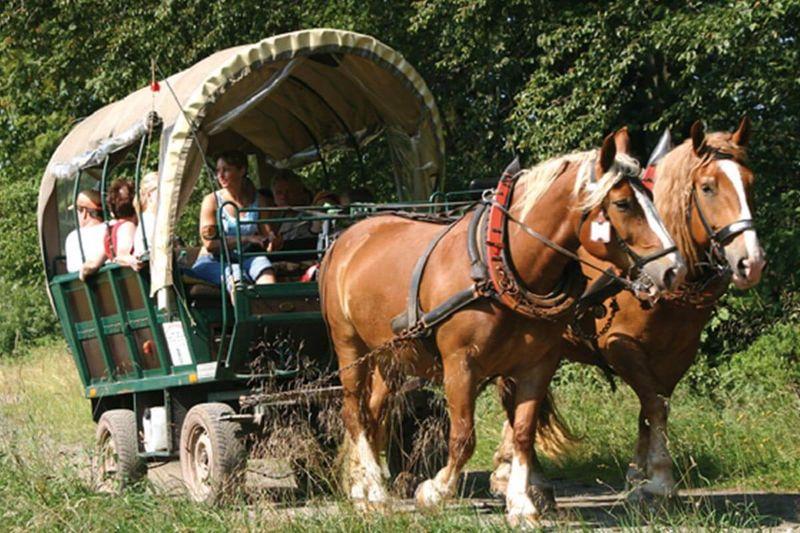 Planwagenfahrt durch den Thüringer Wald