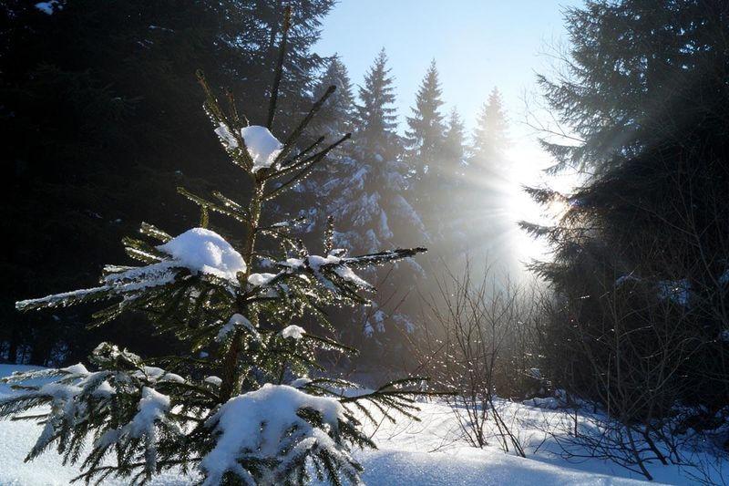 Rundweg Veilchenbrunnen