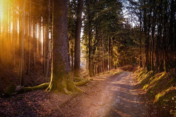 Wald-wandern