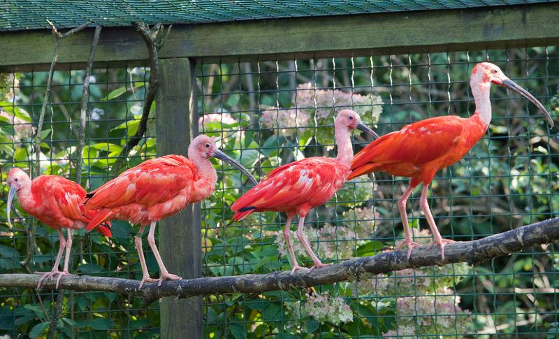 Im Vogelpark Irgenöd