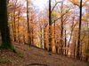 Bunter Herbstbuchenwald im Naturschutzgebiet Donauleiten im Bayerischen Wald