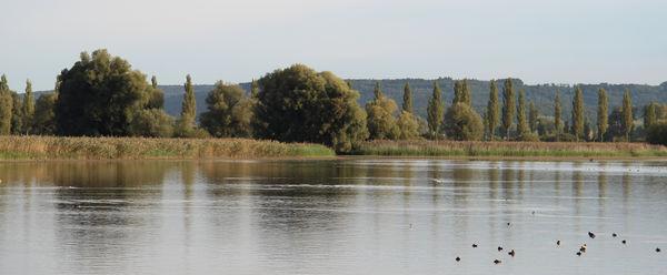 Blick vom See auf die Radolfzeller Aachmündung