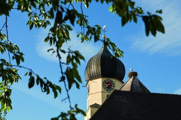 Störche auf dem Kirchturm von Böhringen