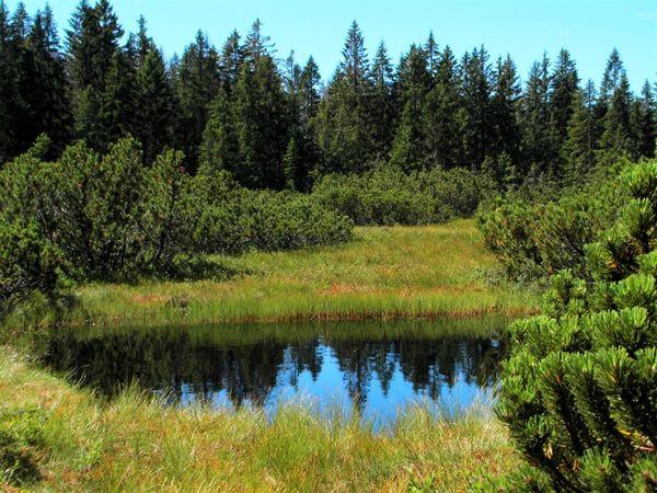 Moorauge im Hochmoor Zwieselter Filz im Nationalpark Bayerischer Wald