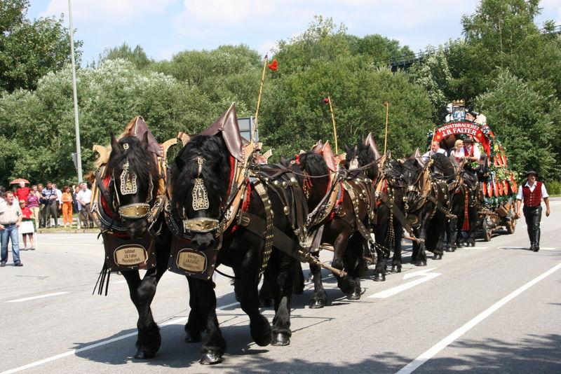 Pferdegespann der Brauerei Falter beim Pichelsteiner-Festzug durch die Kreisstadt Regen