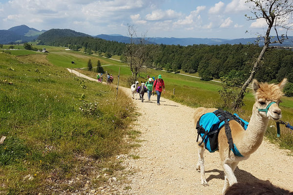 Alpaka Trekking