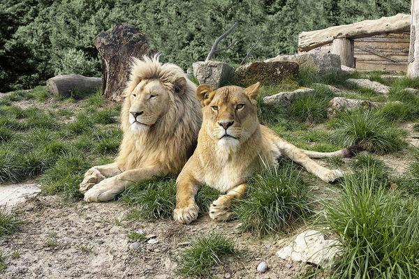 Sikypark Crérmines Lion