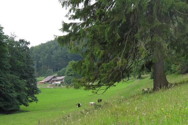 Berghof Montpelon