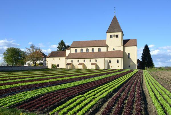 Kirche St. Georg mit Salatfeld davor