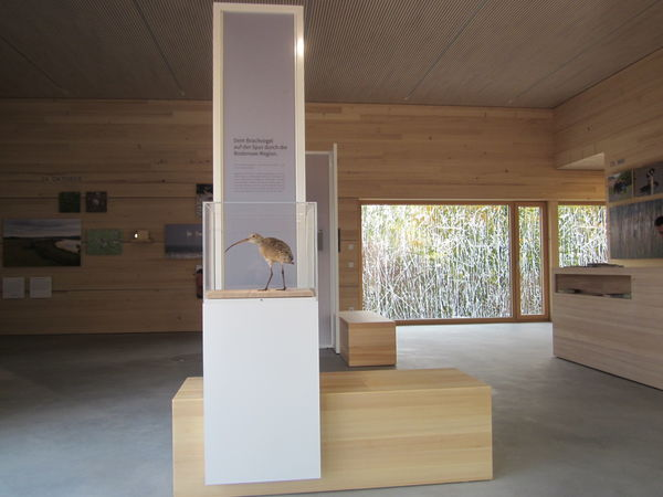 NABU-Bodenseezentrum Ausstellung Brachvogel
