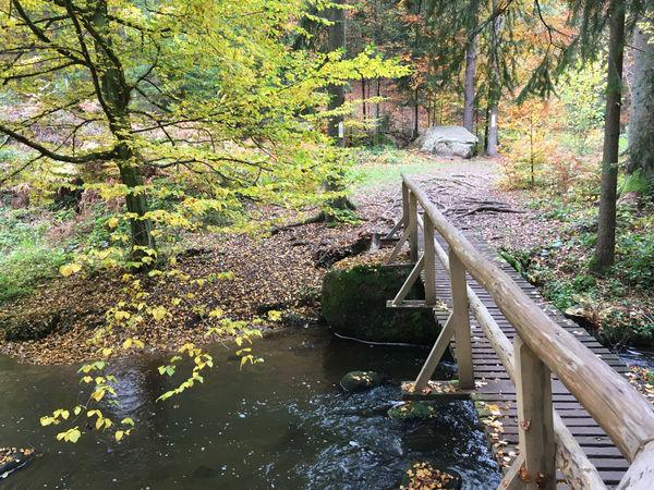 Das Naturschutzgebiet Höllbachtal im Bayerischen Wald