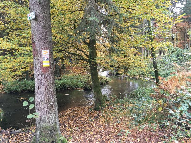 Beliebtes Wanderziel bei Postfelden: Das Naturschutzgebiet Höllbachtal