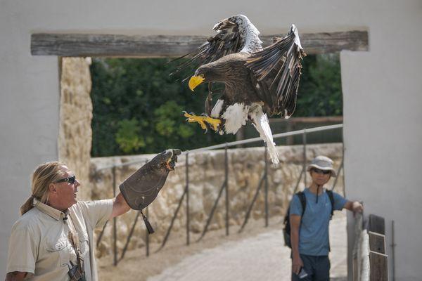 Flugschau der Greifvögel, Falkenhof Rosenburg in Riedenburg