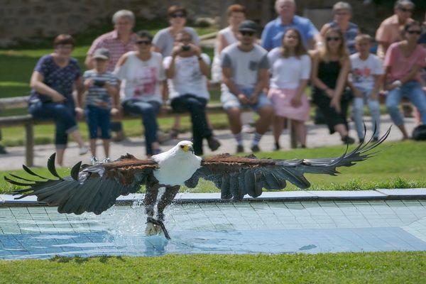 Flugschau der Greifvögel auf der Rosenburg in Riedenburg
