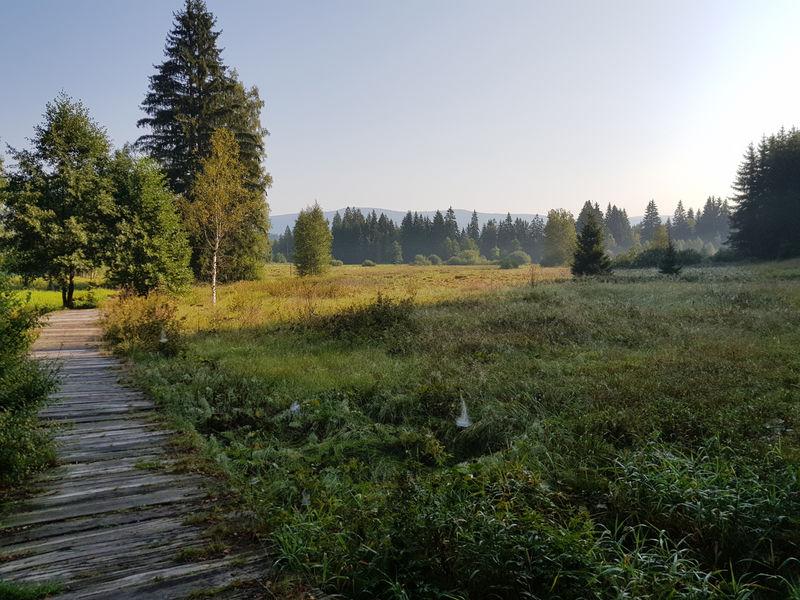 Im Naturschutzgebiet Klosterfilz in Riedlhütte