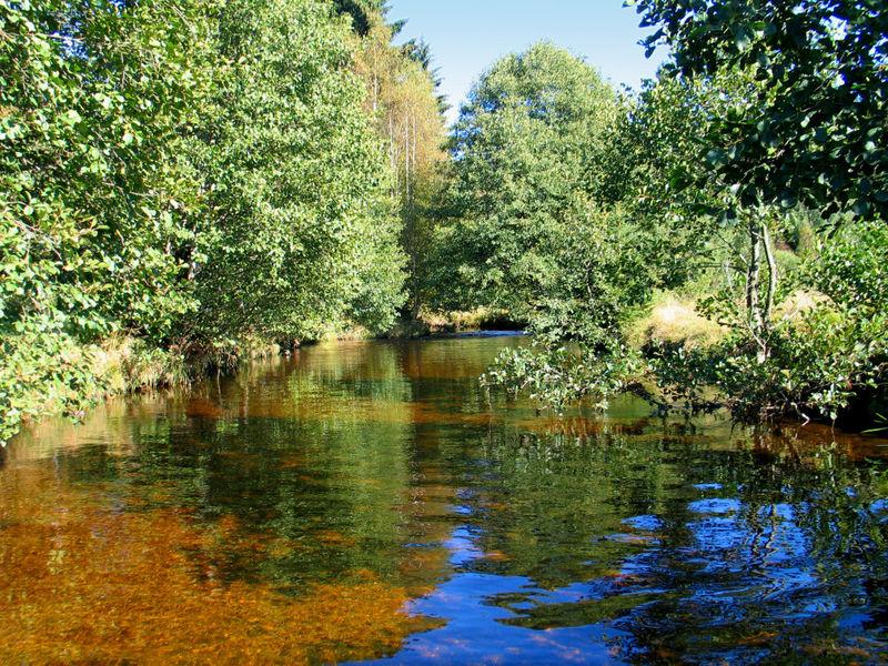 Naturschutzgebiet Großer Filz und Klosterfilz bei Riedlhütte im Nationalpark Bayerischer Wald