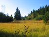 Herbststimmung im Naturschutzgebiet Großer Filz und Klosterfilz bei Riedlhütte