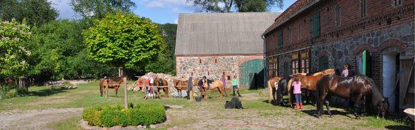 Pferde vom Rüsterhof, Foto: Elke Melchert