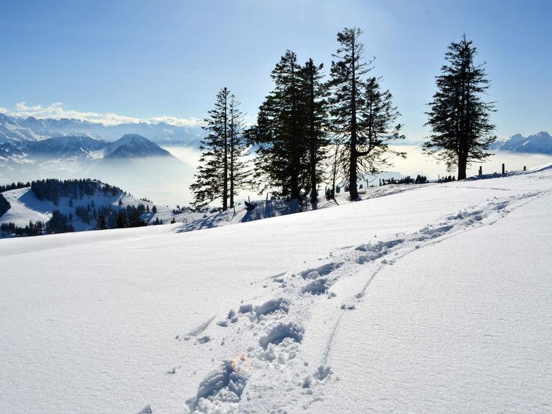 Schneeschuhtrail 2.5 km